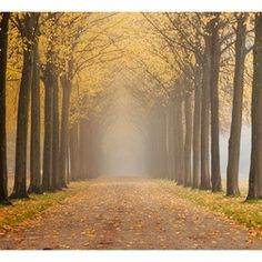 Fotótapéta - Journey to the unknown Country Roads, Journey, The Journey