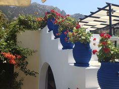 Kos-Zia-Greece Geraniums, Kos, Great Places, Greece, World, Outdoors, Travel, Style, Greece Country