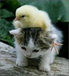 kitty back ride