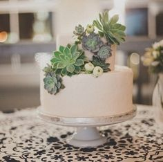 succulently urban cake topping