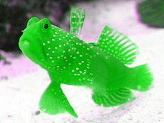 flag of Ocean Simply breathtaking - sea life Saltwater Tank, Saltwater Aquarium, Aquarium Fish, Marine Aquarium, Marine Fish, Marine Tank, Underwater Creatures, Ocean Creatures, Colorful Fish