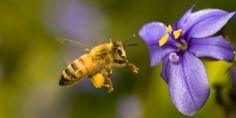 De Tweede Kamer kan de pesticiden verbieden die onze bijen en vogels bedreigen. Producenten van de landbouwgif lobbyen hiertegen. Het debat vindt al over enkele dagen plaats. Klik hier en teken deze oproep aan onze parlementariërs om voor de natuur te stemmen.
