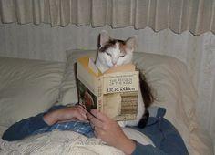 KEDİLER VE KİTAPLAR | Eskimeyen Kitaplar  #book #cat #kedi #kitap #JRRTolkien