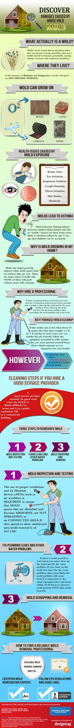 Discover Damages Caused by Household #Mold – #Infographic