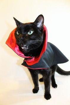 Hairy Potter or Purrmione Grainger?? lol u003eu003eu003e Harry Potter Cat | Fantastically Feline | Pinterest | Hogwarts Harry potter and Cat & Hairy Potter or Purrmione Grainger?? lol u003eu003eu003e Harry Potter Cat ...