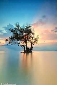 a lonely tree in Indonesia