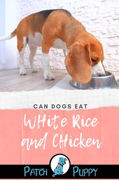 Can I Feed My Dog Chicken and Rice All the Time? How Much Chicken and Rice for Dog by Weight? Check out our post Can Dogs Eat White Rice and Chicken to learn more.