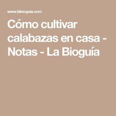 Cómo cultivar calabazas en casa - Notas - La Bioguía