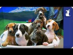The Litter with Sharon Osbourne - Episode 9