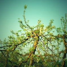 Kenichi Kamio - Apple blossom from Today's piano piece May.15,2014