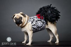 Black Damask Feather Harness Dog Dress by KOCouture on Etsy