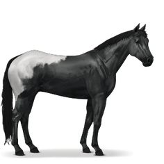 My horse Peanut   Mother of lots of Horses  Purebred Apoloosa