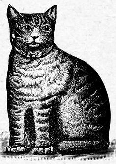 Arnold Printworks Cat