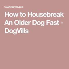 How to Housebreak An Older Dog Fast - DogVills