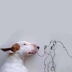 Jimmy Choo, the beautiful bull terrier: a series of fun illustrations made by his owner Rafael Mantesso (VI) l #Instagram #doodleart #photography