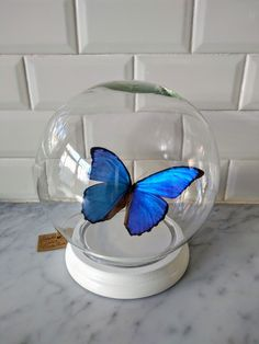 Keeping it simple. Morpho Didius made by INScT. Butterfly Centerpieces, Butterfly Decorations, Butterfly Frame, Blue Butterfly, Cinderella Quinceanera Themes, Quinceanera Planning, Butterfly Theme Party, Quince Decorations, Quinceanera Centerpieces