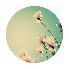Circle crop by blaze jonas, use (: ❤ liked on Polyvore