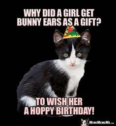 Hilarious Cats Tell Funny Birthday Jokes Humorous Felines Send Happy Purr Day Greetings Catty Memes To Share With Family Friends And Cat