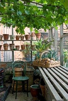 Potting shed with vine. Incorporates the multiple heights for shelves and the potter-friendly growing shelves that lets dirt slip through. Natural wood or white wash? Greenhouse Shed, Greenhouse Gardening, Outdoor Rooms, Outdoor Gardens, Outdoor Living, Dream Garden, Home And Garden, Potting Sheds, Potting Benches