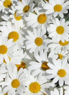 Shasta daisies...my wedding flowers in 1975...along with yellow roses.