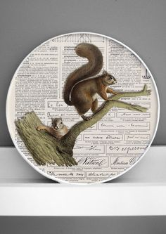squirrel framed 3D natural history print framed by DigitalArtParis
