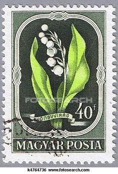 A stamp printed in Hungary shows Lily of the Valley, series, circa 1951