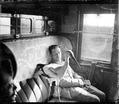 The Ace pilot Lieutenant René Fonck and his pet cigogne, Hélène in the train. June 1918.