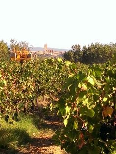 Azille and Carignan in the Minervois