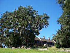 Middleton Place-Charleston, SC Beautiful place to visit-a must see.