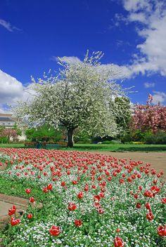 primavera!!!!