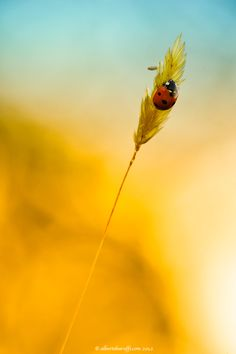 Little red - by Alberto Baruffi, via 500px