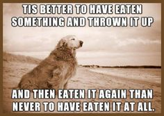 bad dog retriever greedy eater glutton puppy eats everything sick food