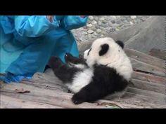 Video 013 Yun Zi Falls to the Box - YouTube