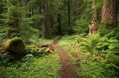 12 Wilderness Hikes in Washington State