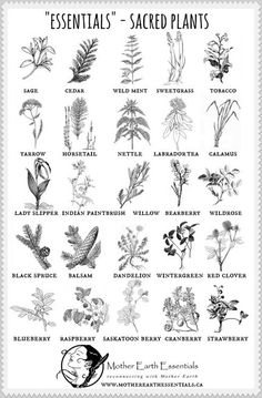 Many plants has healing property. Here a some essentioal for use in your home (scheduled via http://www.tailwindapp.com?utm_source=pinterest&utm_medium=twpin&utm_content=post196947655&utm_campaign=scheduler_attribution)