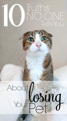10 Truths No One Tells You About Losing a Pet- If you or someone you know lost a pet recently and is trying to figure out how to cope, send them this article. Grieving is a very personal experience, but there are things no one will tell you that you need