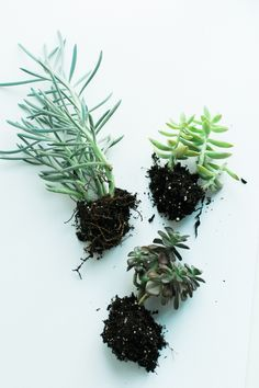 How to rehab your succulents. Wake up those plants that have seen better days with these simple tips!