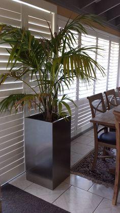 Indoor Plants Low Light, Indoor Plant Pots, Pot Plants, Porch Privacy, Steel Planter, Planter Pots, Decorating Rooms, Potted Trees, Concrete Planters