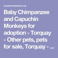 Baby Chimpanzee and Capuchin Monkeys for adoption - Torquay - Other pets,  pets for sale, Torquay - 289003