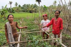 Using seeds and tools provided by CWS, the Mawar women's group in Nias, Indonesia, is harvesting tomatoes, spinach and peppers to feed themselves and their families.