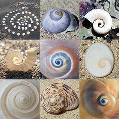 Mini-Postkarte: Spiralen Poster, Mini, Animals, Spirals, Postcards, Animales, Animaux, Animal Memes, Animal
