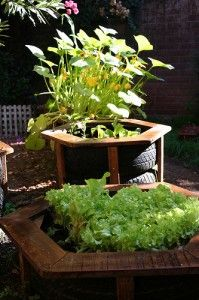 Here is an interesting planter.  To hide the tread and keep the plant from standing water cut out a sidewall and turn inside out.  Makes it look less tireish too.   Learn more at http://shop.tirecrafting.com/