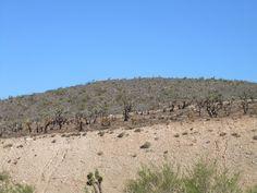 . Nevada Desert, Deserts, Beach, Water, Outdoor, Gripe Water, Outdoors, The Beach, Postres