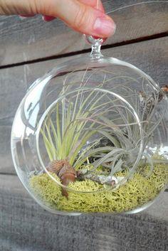 Home Decor . . . Globe Air Plant       - Plant Life!