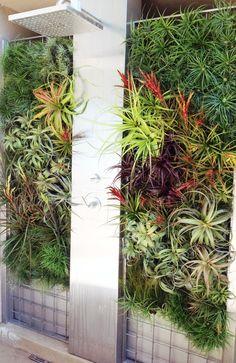 Outdoor Vertical Tillandsia Shower