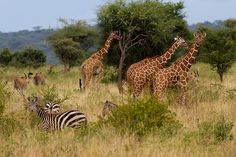 """""""Born free...again: the revival of #Kenya's Meru National Park"""" - @Lonely Planet #travel"""