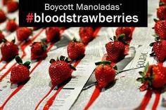boycott Manolada's blood strawberries