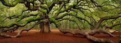 Angel Oak (South Carolina)