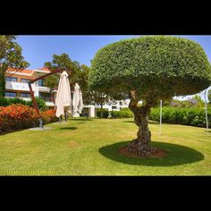 #hilton #vilamoura #hgvc #hotel #resort #garden #green #lawn #sunnyday