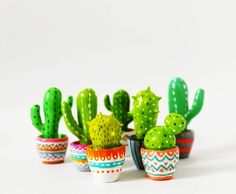 Cactus in colorful pots.